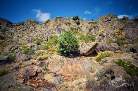 España, Sanabria, Spain, Zamora, landscape, paisaje, piedra, pine, pino, roca, rock, stone, tree
