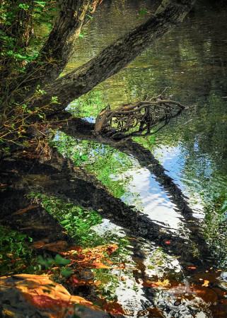España, Sanabria, Spain, Zamora, agua, branch, rama, reflection, reflejo, river, río, tree, water, árbol