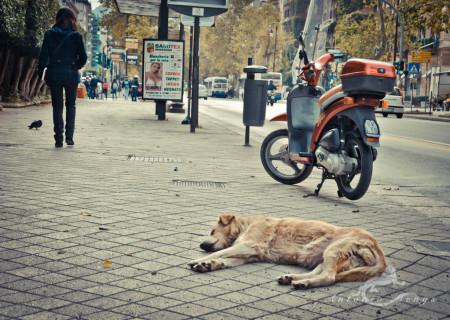 Palermo, Sicilia, Sicily, calle, car, coche, dog, moto, motorcycle, perro, person, persona, street
