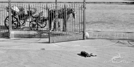 Palermo, Sicilia, Sicily, caballo, calle, carruaje, coach, dog, entrada, entrance, horse, perro, street, verja, wall