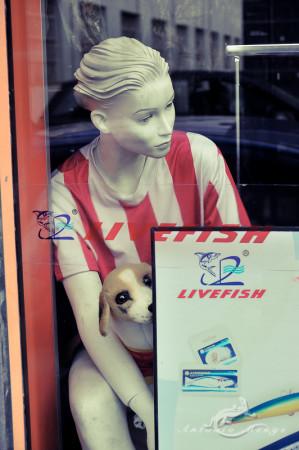 dummy, maniquí, mannikin, mankin, mannequin, hombre, man, window, ventana, perro, dog