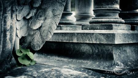 Cementerio, Madrid, ala, column, columna, escultura, funeral, funeraria, hoja, leave, sculpture, vegetable, vegetal, wing