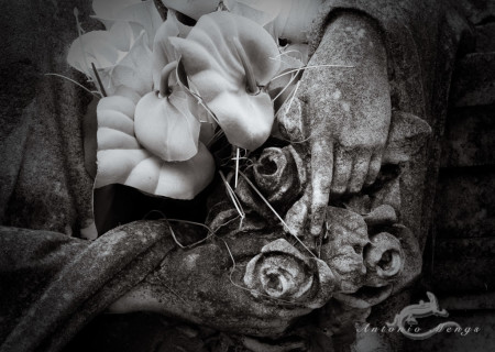 Cementerio, Madrid, cross, cruz, flor, flower, hand, mano
