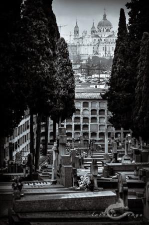 Cementerio, Madrid, catedral, cathedral, church, ciprés, cypress, iglesia, niche, nicho, sepulcher, sepulcro, tomb, tumba