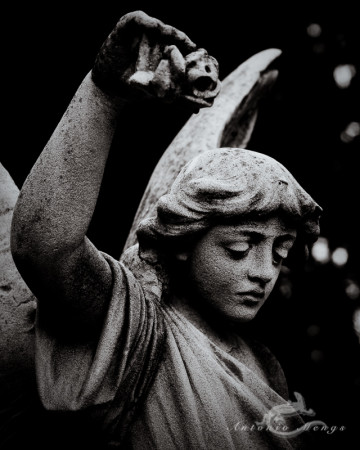 Cementerio, Madrid, angel, escultura, flor, flower, funeral, funeraria, sculpture