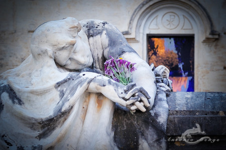 Alcoy, cementerio, cemetery, escultura, flor, flower, hand, mano, reflection, reflejo, sculpture, tomb, tumba, ventana, window