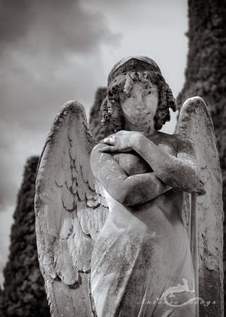 Cementerio, Madrid, angel, cemetery, ciprés, cypress, ángel