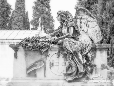 Cementerio, Madrid, angel, cemetery, ciprés, cypress, grave, graveyard, tomb, tumba, ángel