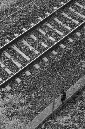 Delicias, Madrid, cat, estación, ferrocarril, gato, railway, station, train, tren, via