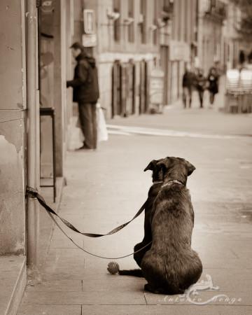 ball, calle, dog, gente, pelota, people, perro, street