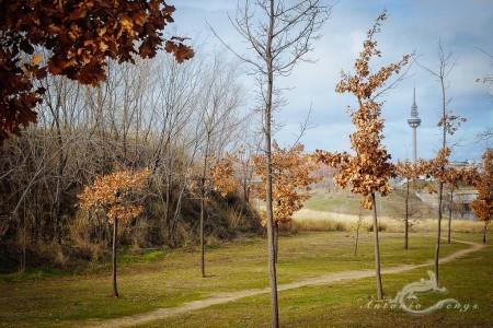 Madrid, parque, park, tree, árbol, television tower