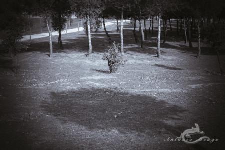 arbusto, bush, park, parque, plant, planta, shadow, sombra, tree, árbol
