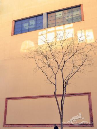 calle, hombre, man, muro, street, tree, ventana, wall, window, árbol