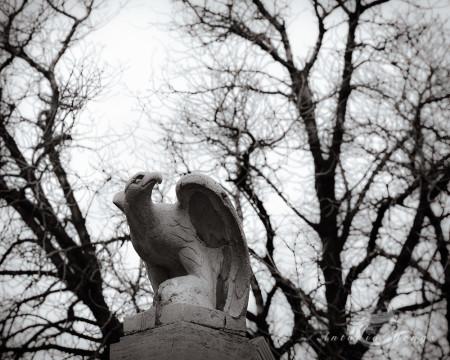 eagle, escultura, sculpture, tree, águila, árbol