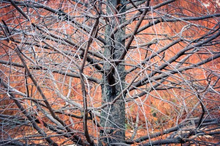 tree, árbol