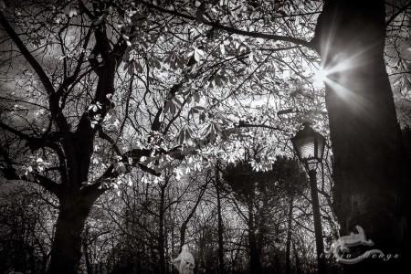farola, landscape, paisaje, park, parque, postlamp, sol, sun, tree, treee, árbol