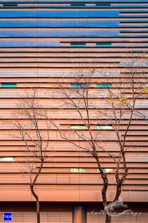 building, edificio, facade, fachada, taxi, tree, árbol