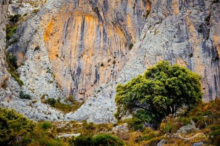 Alicante Alacant Spàin España, Alicante Alacant Spàin España Bernia, landscape, paisaje, roca rock montaña mountain sierra tree árbol