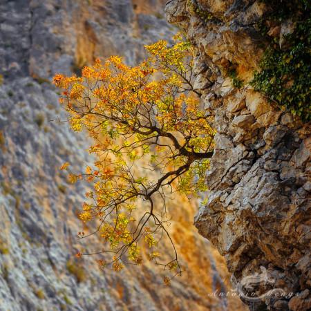 Alicante Alacant Spàin España, Alicante Alacant Spàin España Bernia, landscape, paisaje, roca rock montaña mountain sierra tree árbol leaves hojas