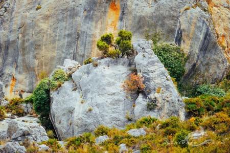 Alicante Alacant Spàin España, Alicante Alacant Spàin España Bernia, landscape, paisaje, roca rock montaña mountain sierra bush arbusto leaves hojas