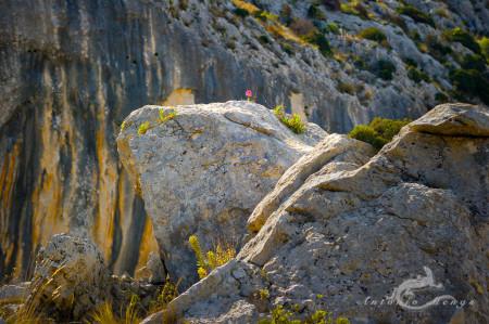 Alicante Alacant Spàin España, Alicante Alacant Spàin España Bernia, landscape, paisaje, roca rock montaña mountain sierra flor flower