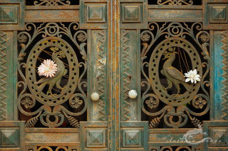 Lapa, Porto, Portugal, bird, cementerio, cemetery, door, flor, flower, puerta, pájaro, rust, óxido