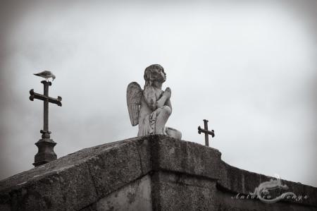 Lapa, Porto, Portugal, angel, bird, cementerio, cemetery, cross, cruz, escultura, pájaro, sculpture, ángel