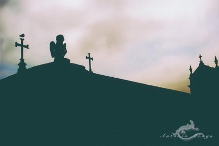 Lapa, Porto, Portugal, angel, bird, cementerio, cemetery, church, cross, cruz, escultura, iglesia, pájaro, sculpture, ángel